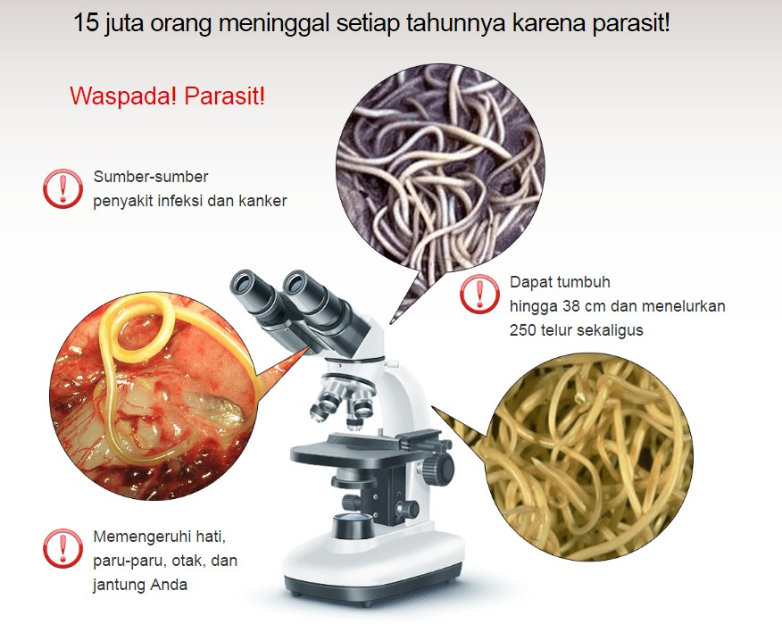 Hermuno Intoxic obat parasit